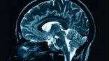 Στον εγκέφαλο κύκλωμα ριψοκίνδυνης συμπεριφοράς