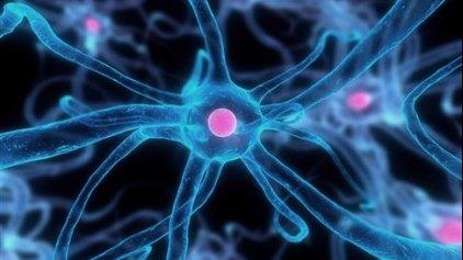 Εγκεφαλικό κύκλωμα προδιαθέτει σε ριψοκίνδυνη συμπεριφορά