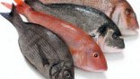 Η κατανάλωση ψαριών διώχνει το άγχος από τις εγκύους