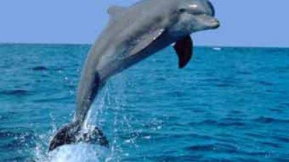 Το δελφίνι έφερε .. χαμόγελα!