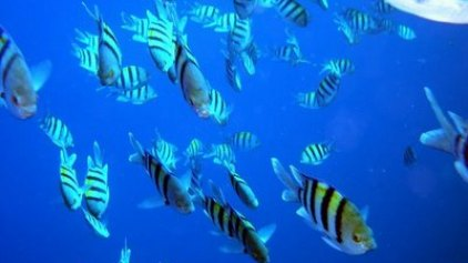 Εγκρίθηκε η γνωμοδότηση για το Ευρωπαϊκό Ταμείο Θάλασσας και Αλιείας