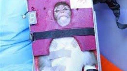 Η μαϊμού που έστειλε το Ιράν στο ...διάστημα