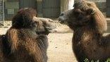 Οι καλύτεροι ζωολογικοί κήποι στον κόσμο που σέβονται την άγρια ζωή