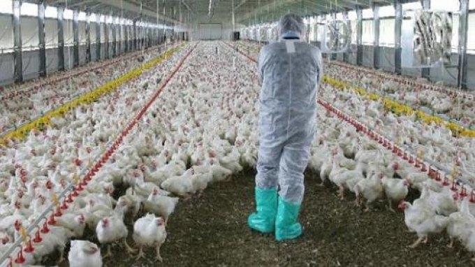 Νέα θύματα από στέλεχος του ιού της γρίπης των πτηνών