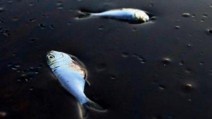 Πετρελαιοκηλίδα δεκάδων χιλιομέτρων απειλεί τις ακτές!