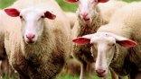 «Καρτέλ» στην εμπορία ζωοτροφών καταγγέλλουν οι κτηνοτρόφοι