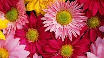Γιατί τα λουλούδια μας φτιάχνουν την διάθεση