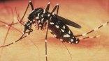 14 νέα κρούσματα του ιού του Δυτικού Νείλου