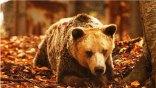 Πέθανε ο γηραιότερος αρκούδος του κόσμου