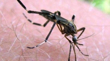 'Ολα όσα πρέπει να γνωρίζουμε για τον ιό του Δυτικού Νείλου